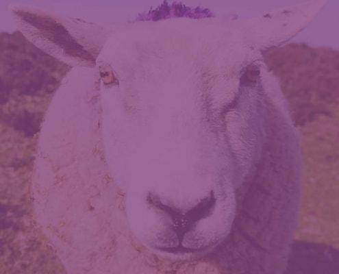 Tierschutz & Tierhilfe in der Schweiz  NEB