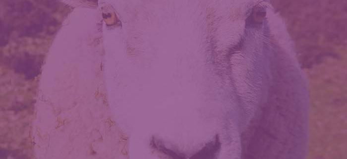 Tierschutz & Tierhilfe in der Schweiz |NEB