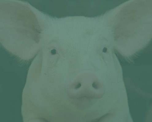 Tierasyl & Tierrecht in der Schweiz  NEB