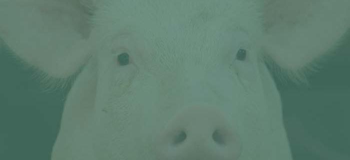 Tierasyl & Tierrecht in der Schweiz |NEB